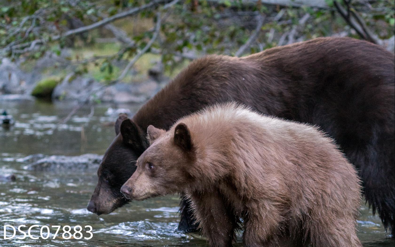 Just Bears-055.jpg