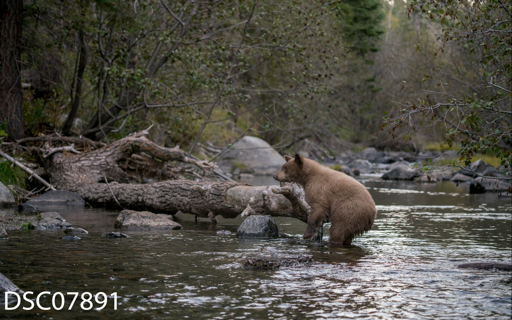 Just Bears-056.jpg