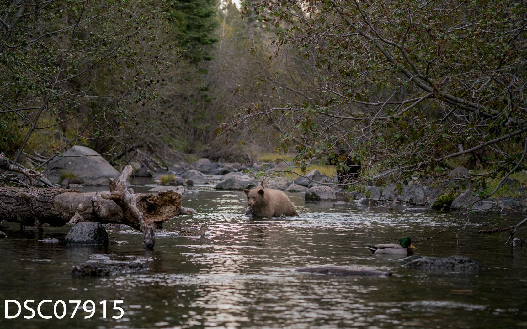 Just Bears-057.jpg
