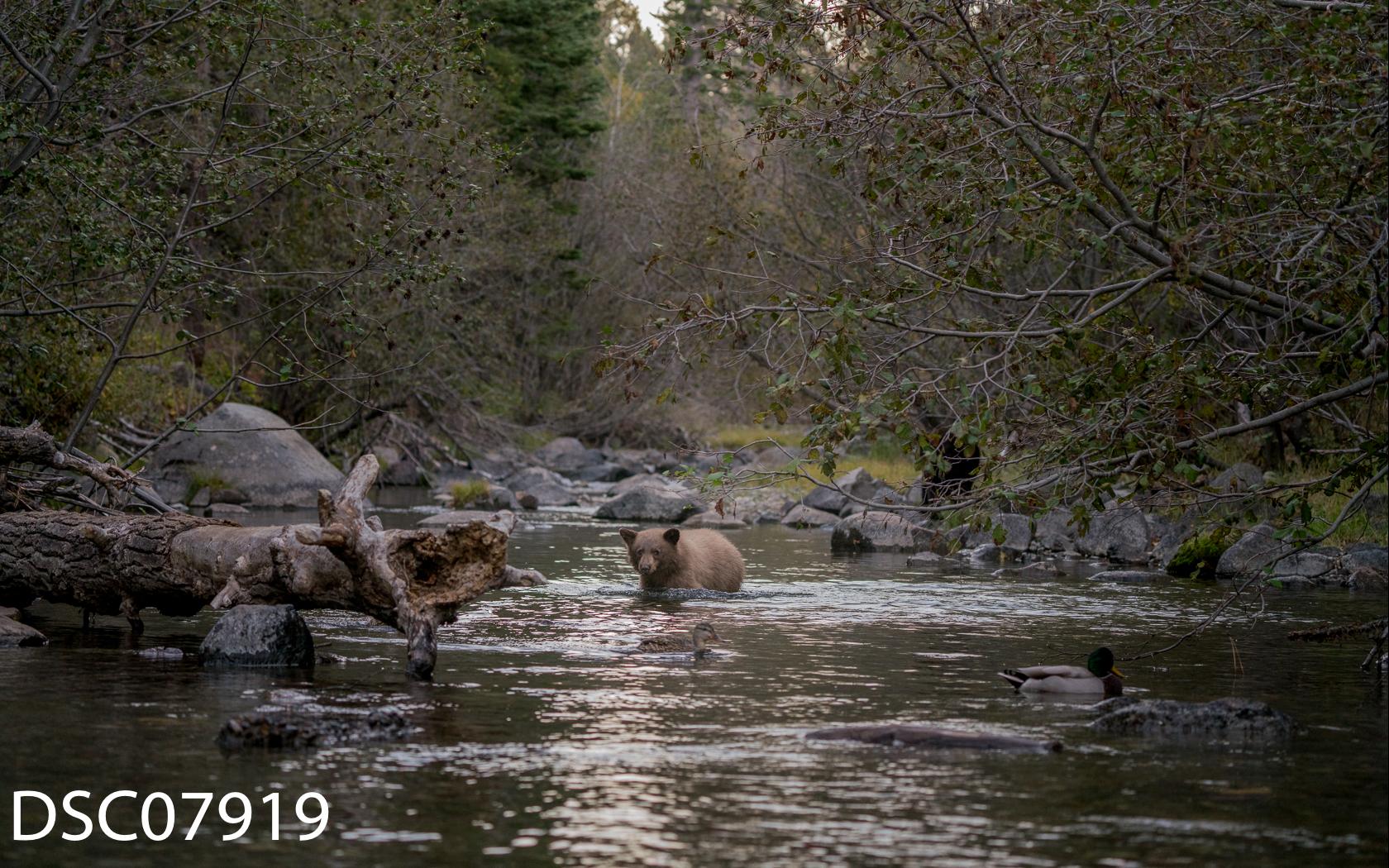 Just Bears-058.jpg