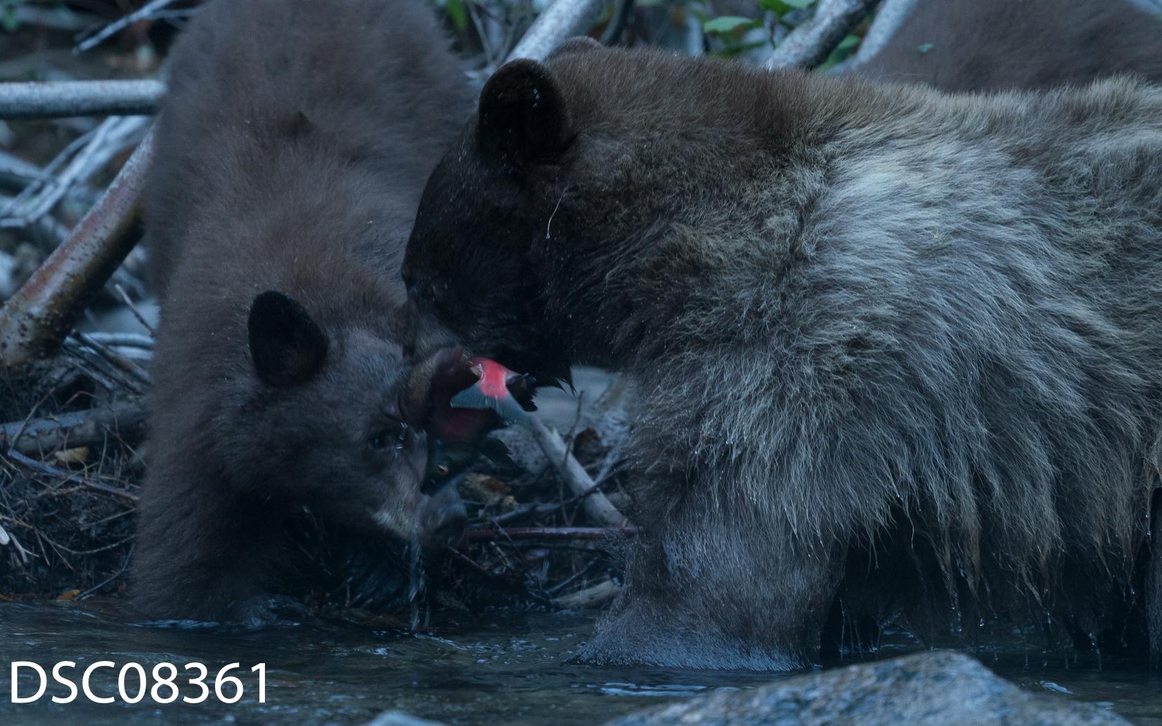 Just Bears-059.jpg