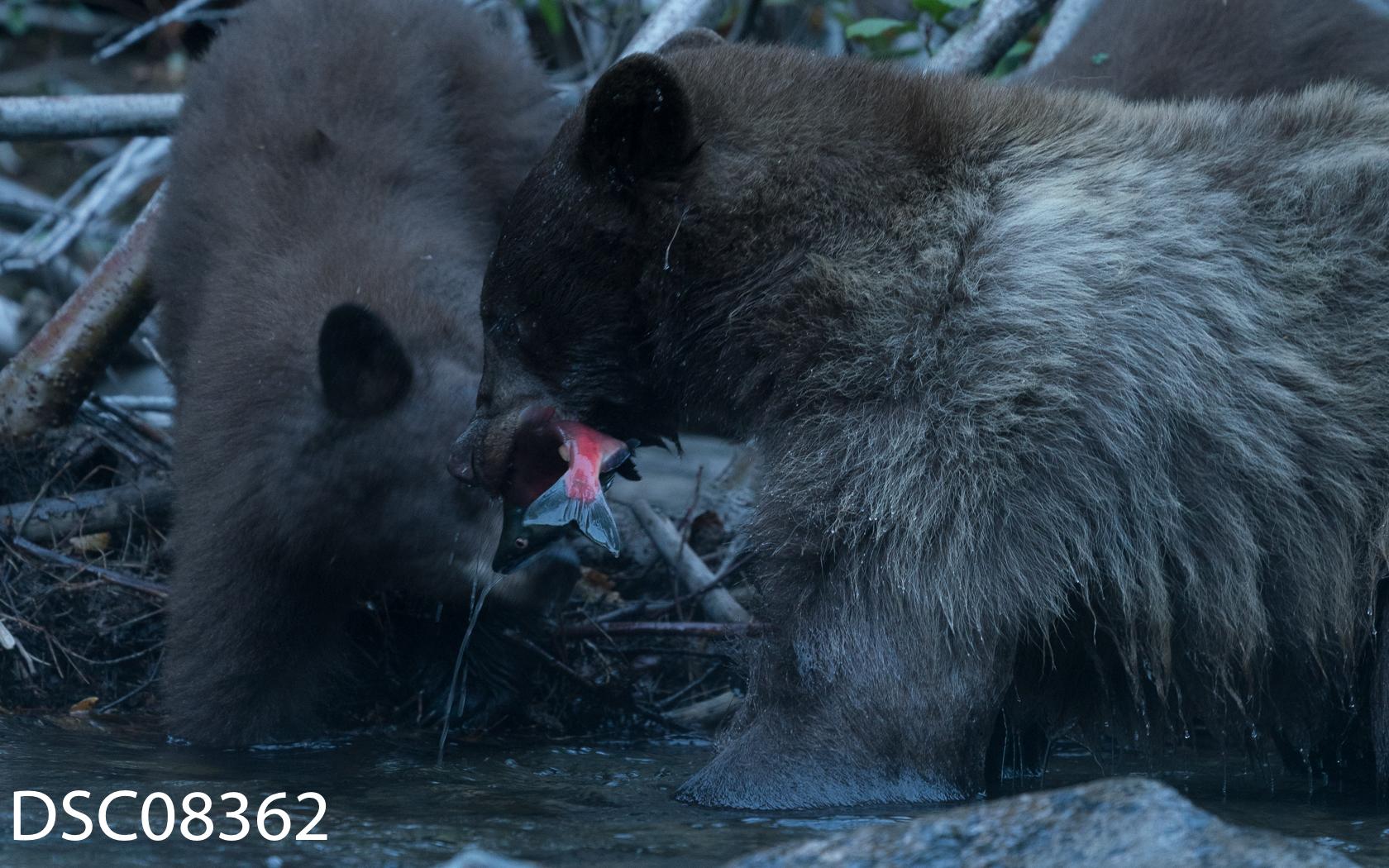 Just Bears-060.jpg