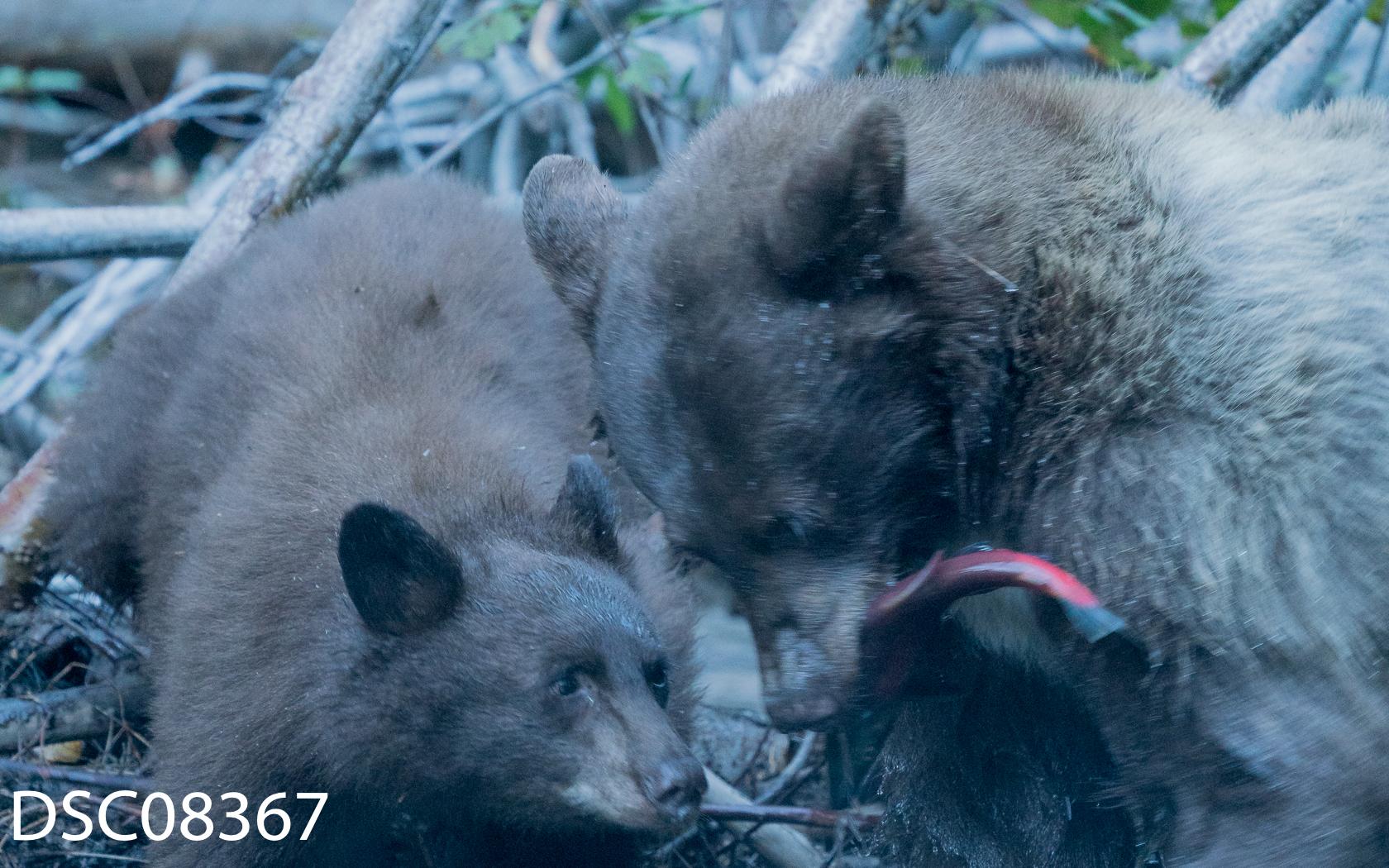 Just Bears-061.jpg
