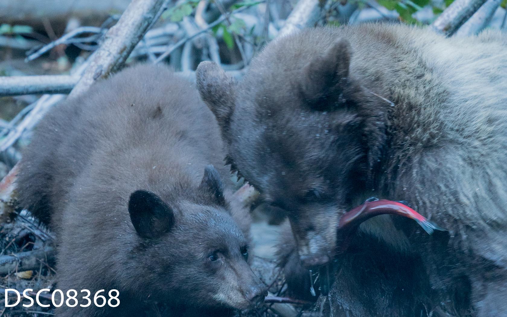 Just Bears-062.jpg