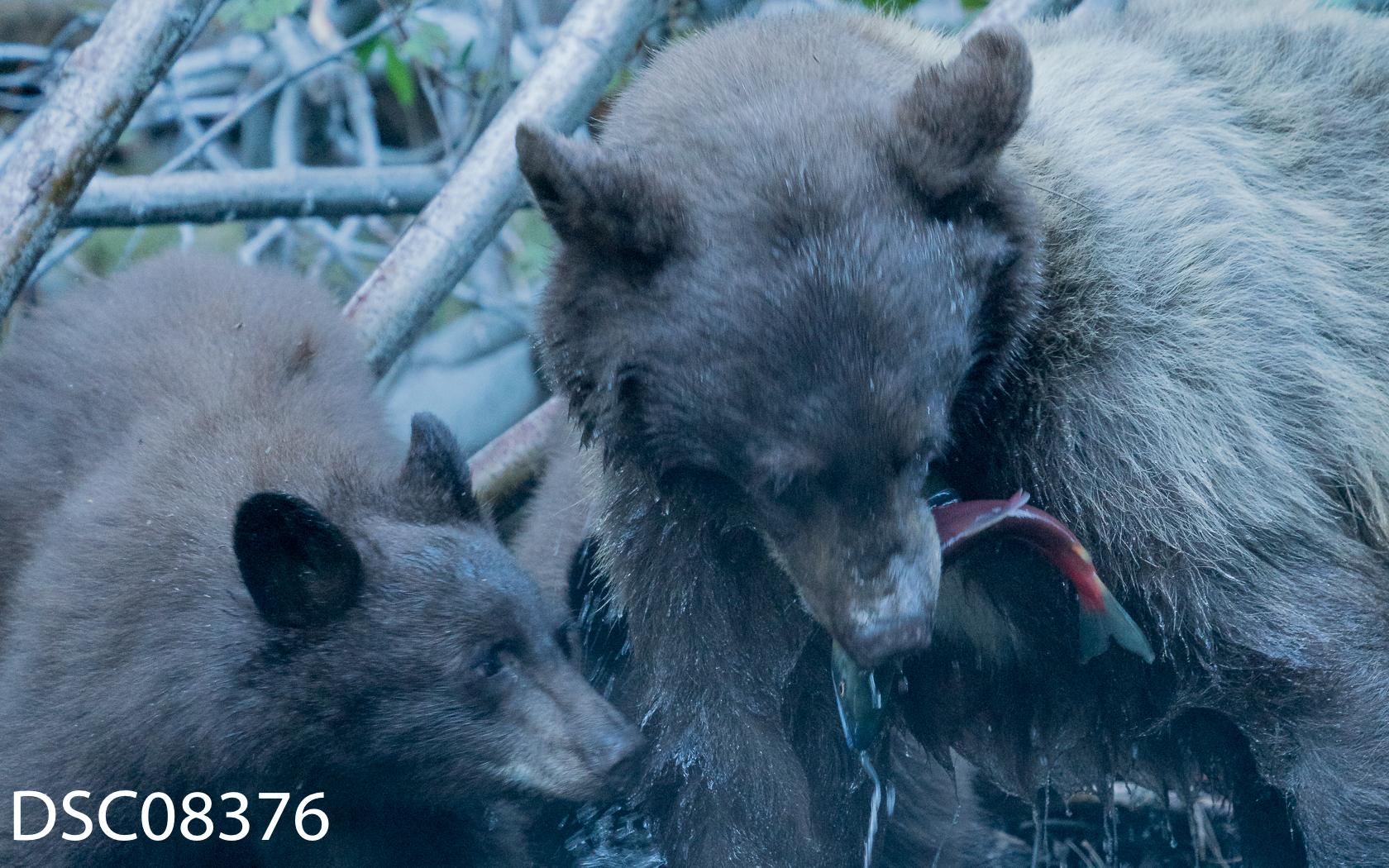 Just Bears-063.jpg