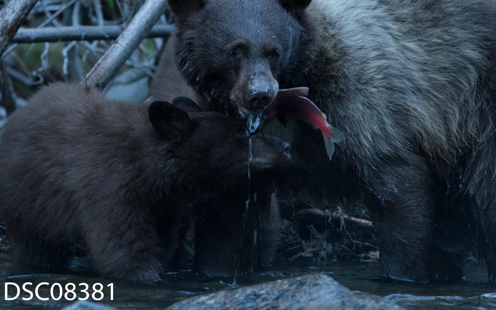 Just Bears-064.jpg