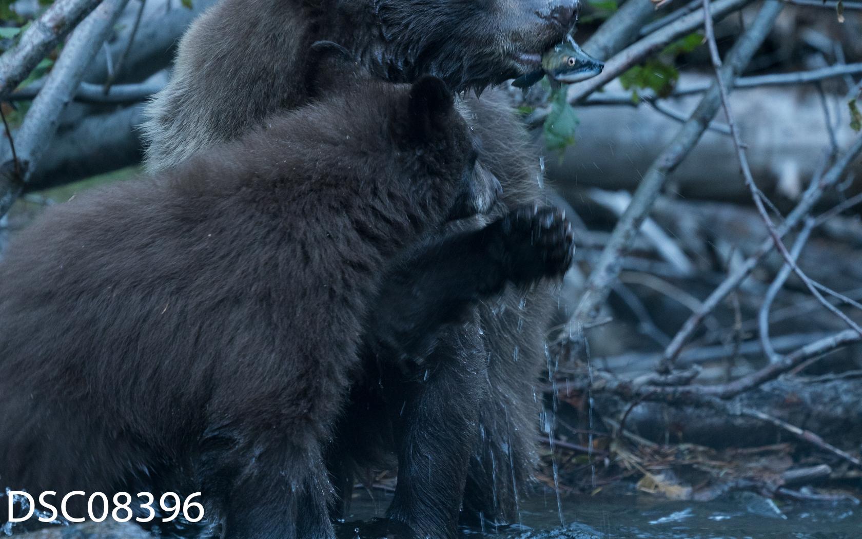 Just Bears-065.jpg
