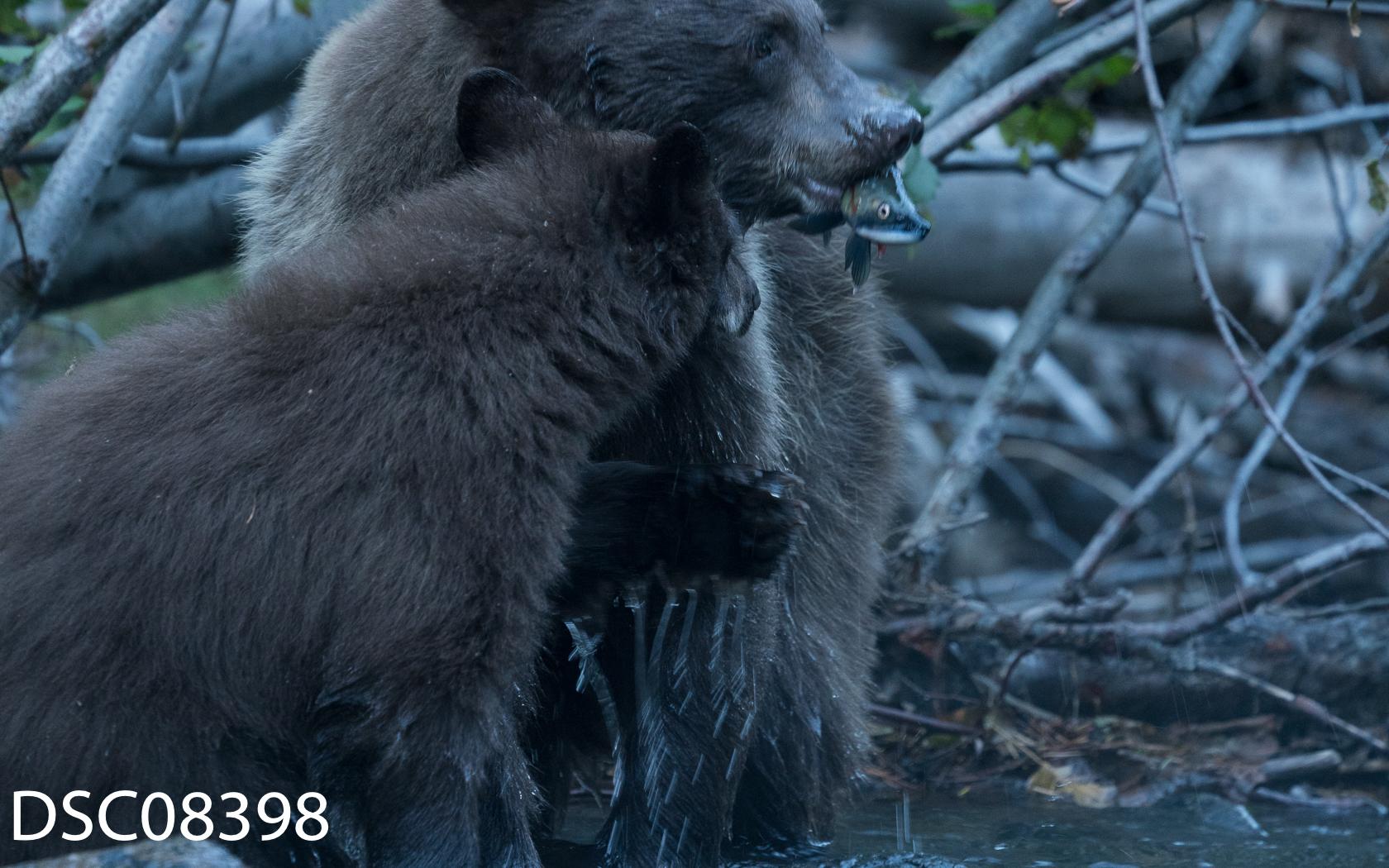 Just Bears-066.jpg