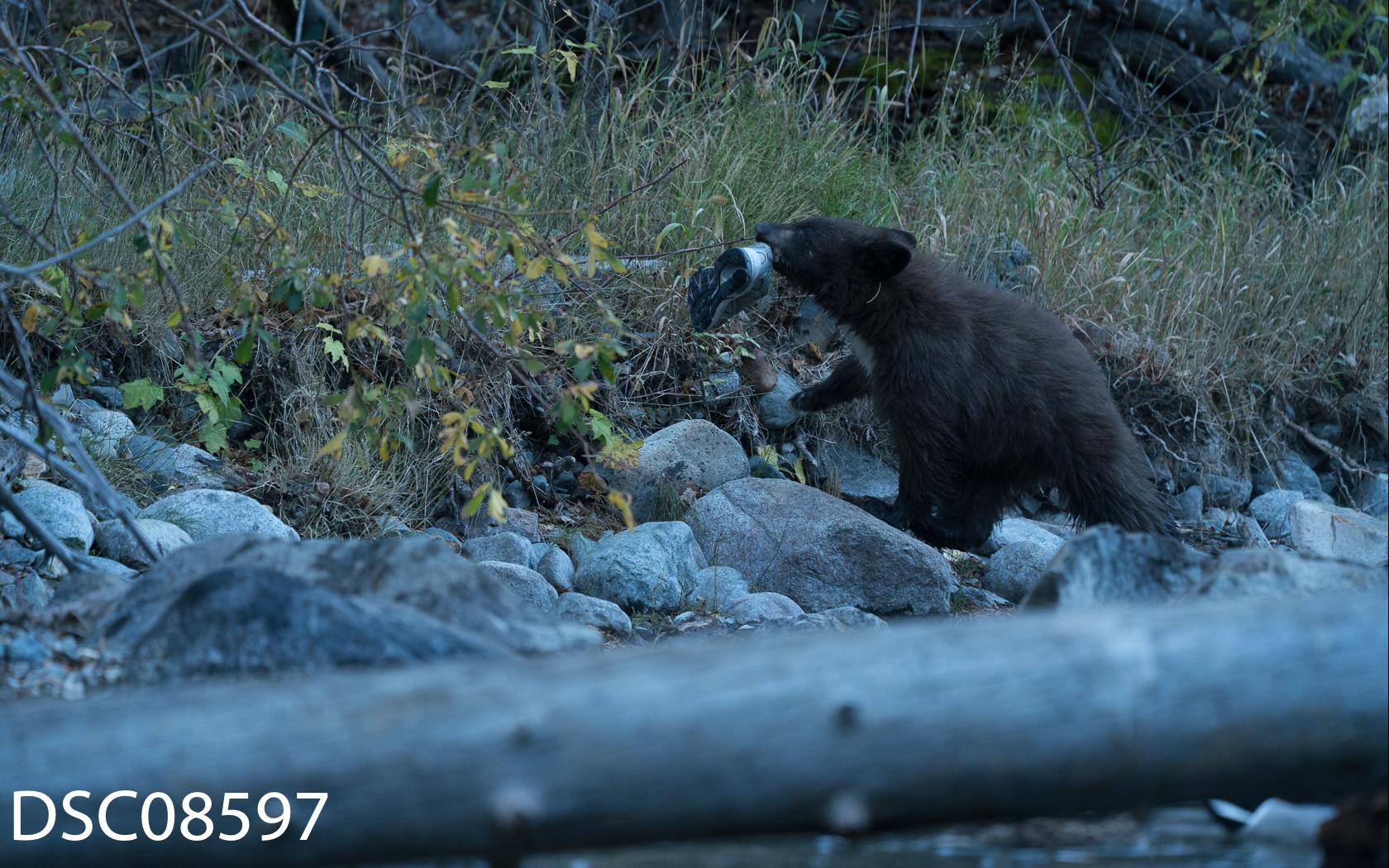 Just Bears-067.jpg