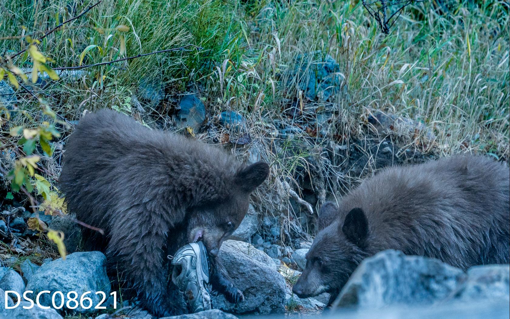 Just Bears-068.jpg