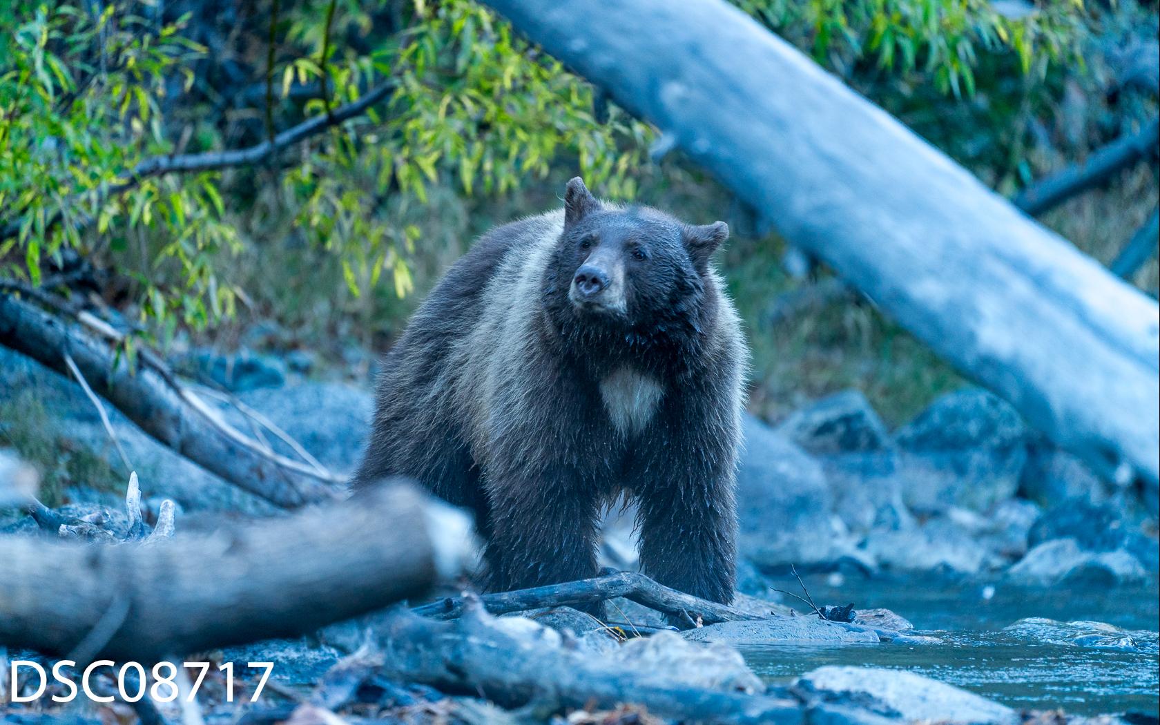 Just Bears-071.jpg