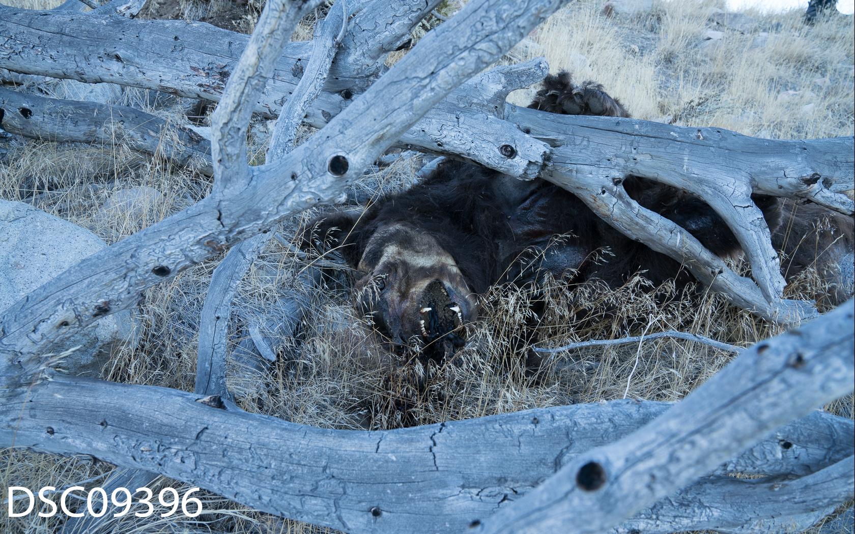 Just Bears-072.jpg