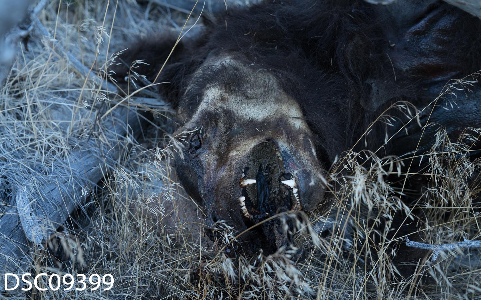 Just Bears-073.jpg