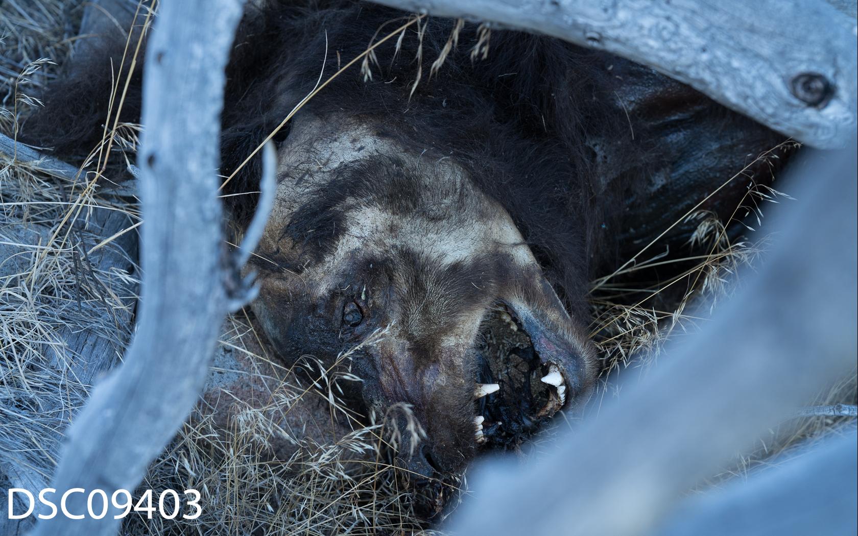 Just Bears-074.jpg