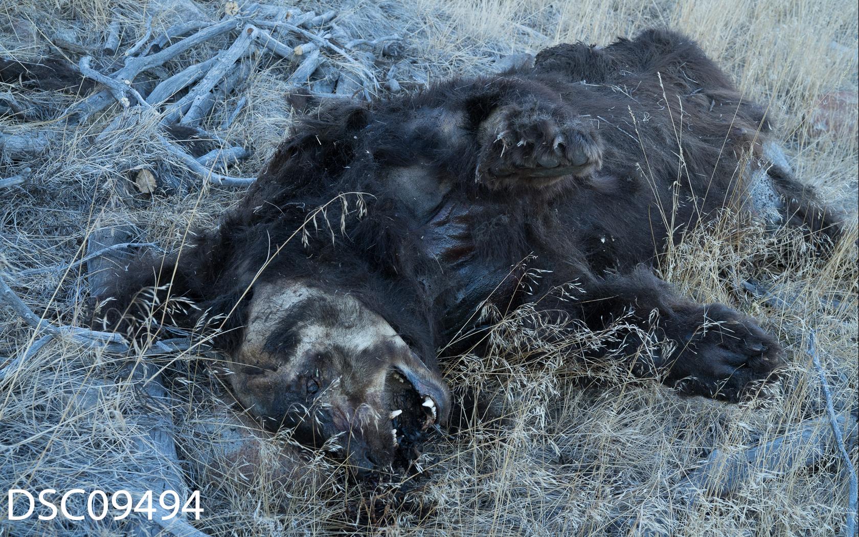 Just Bears-076.jpg