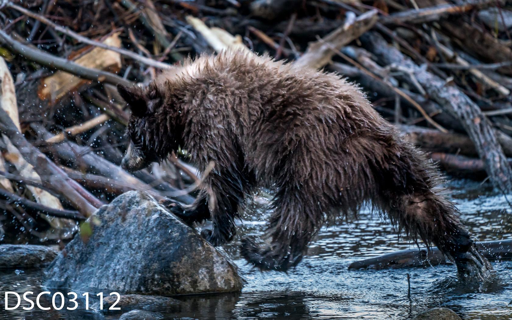 Just Bears-077.jpg