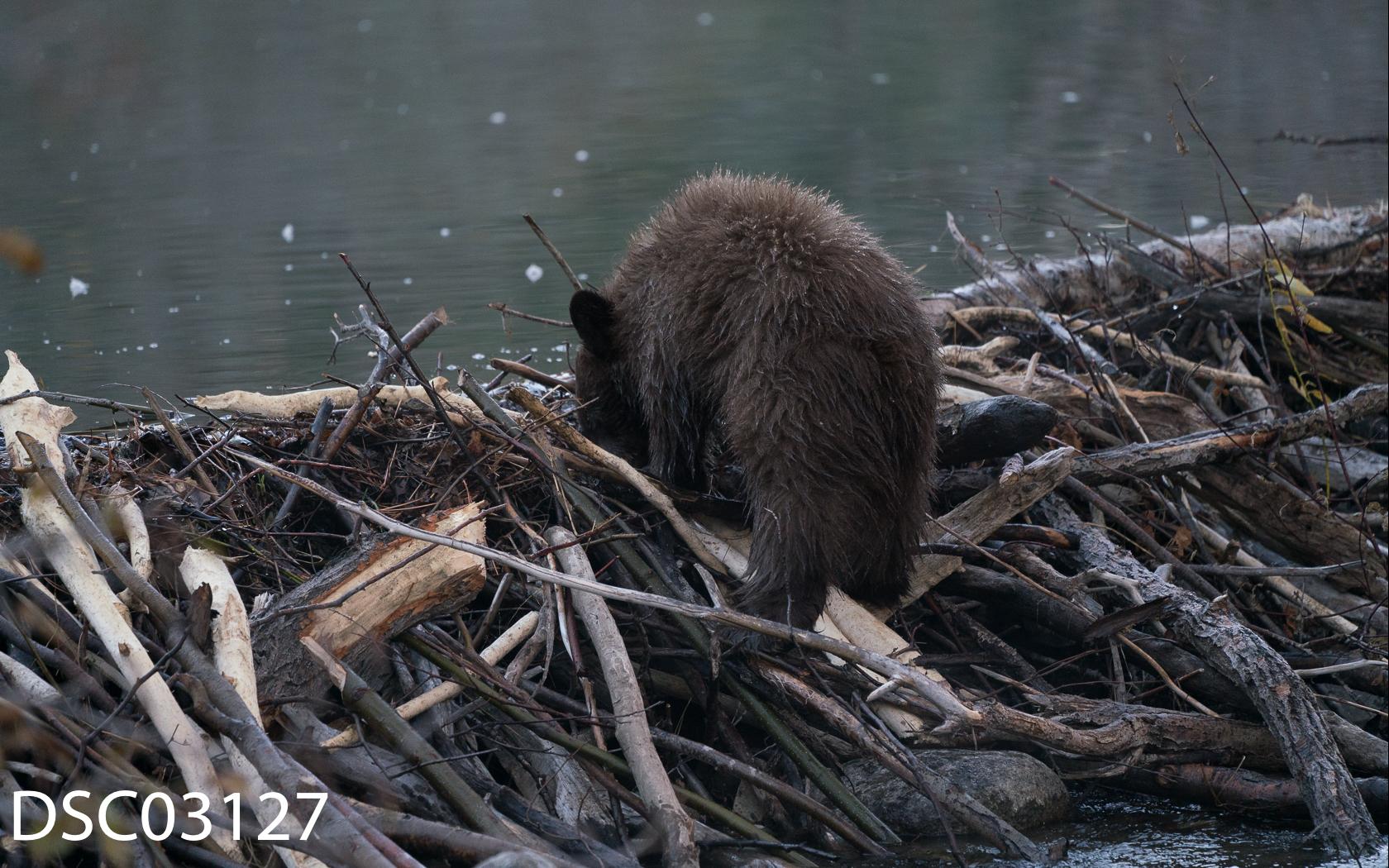Just Bears-078.jpg