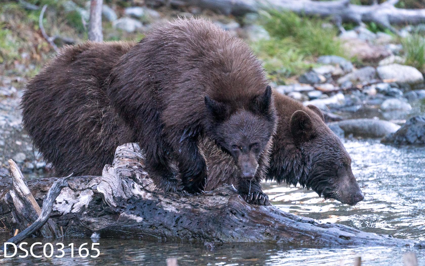 Just Bears-079.jpg
