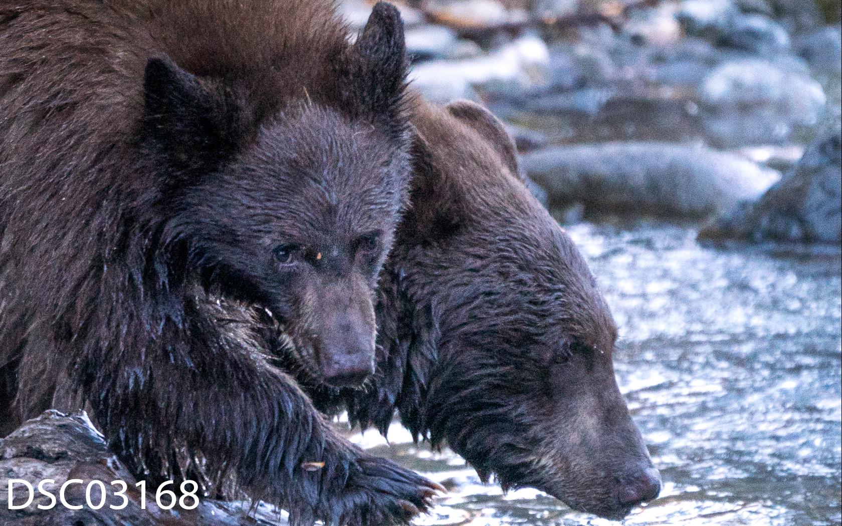 Just Bears-080.jpg