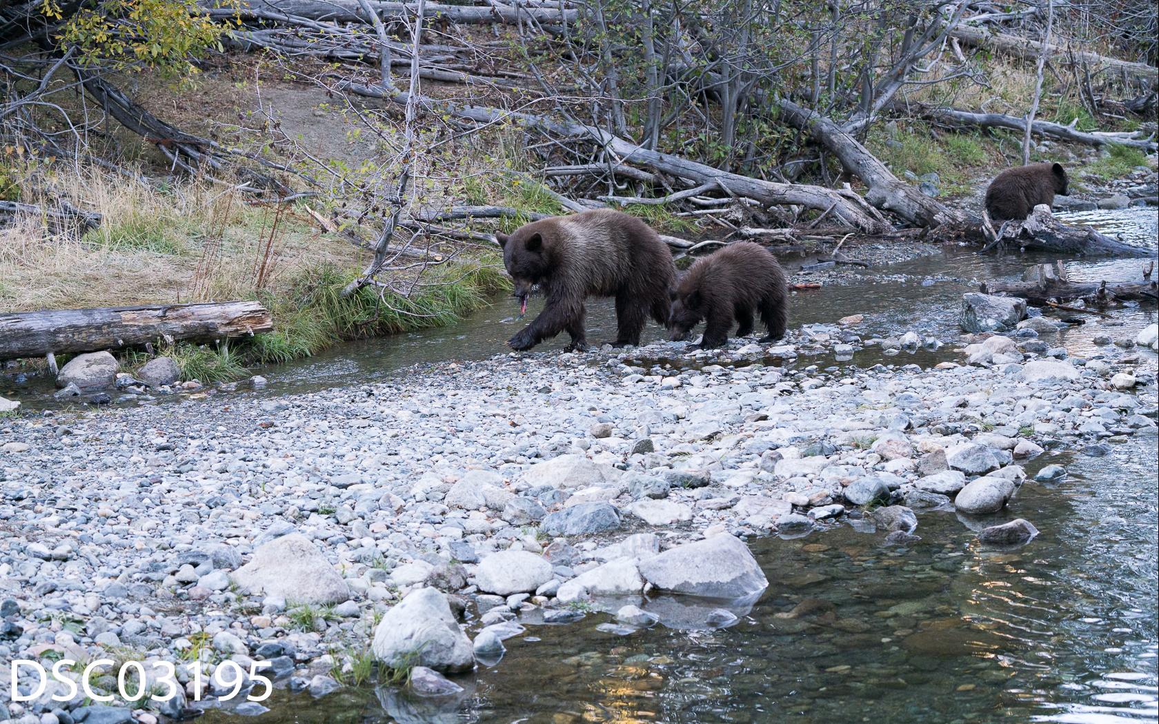 Just Bears-081.jpg