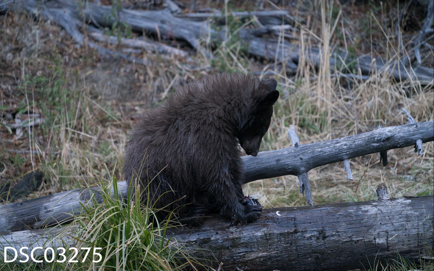 Just Bears-083.jpg
