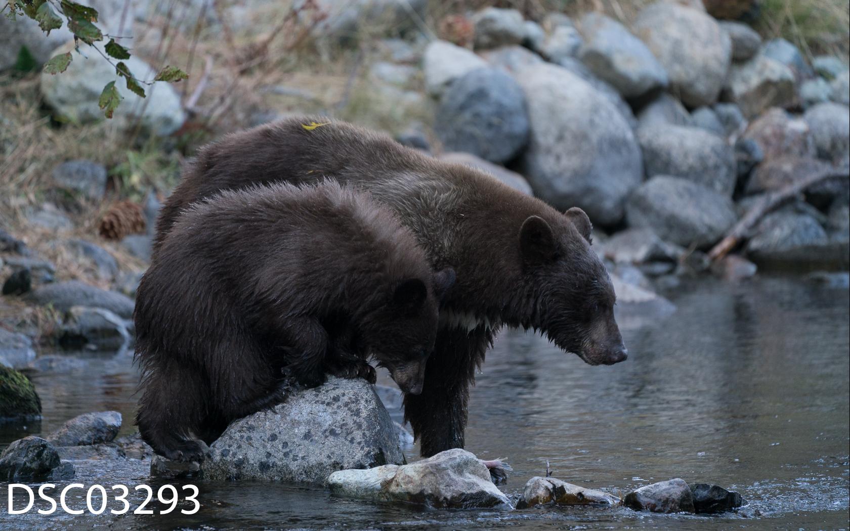 Just Bears-084.jpg