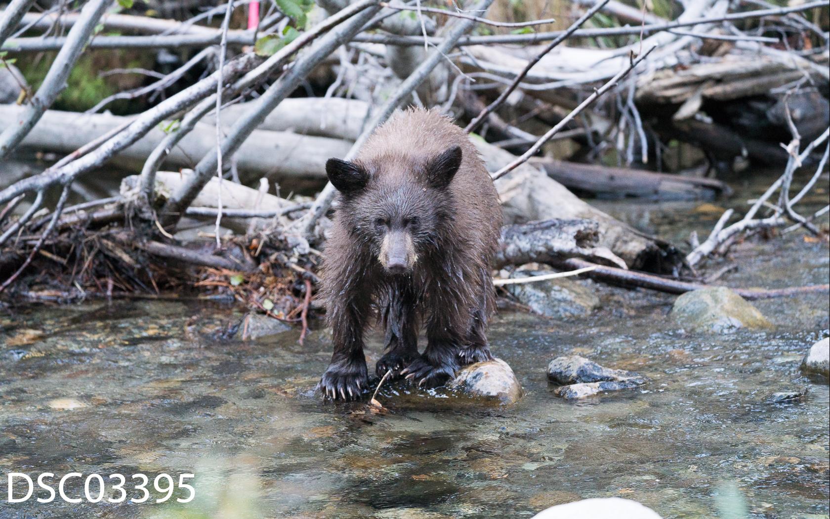 Just Bears-085.jpg