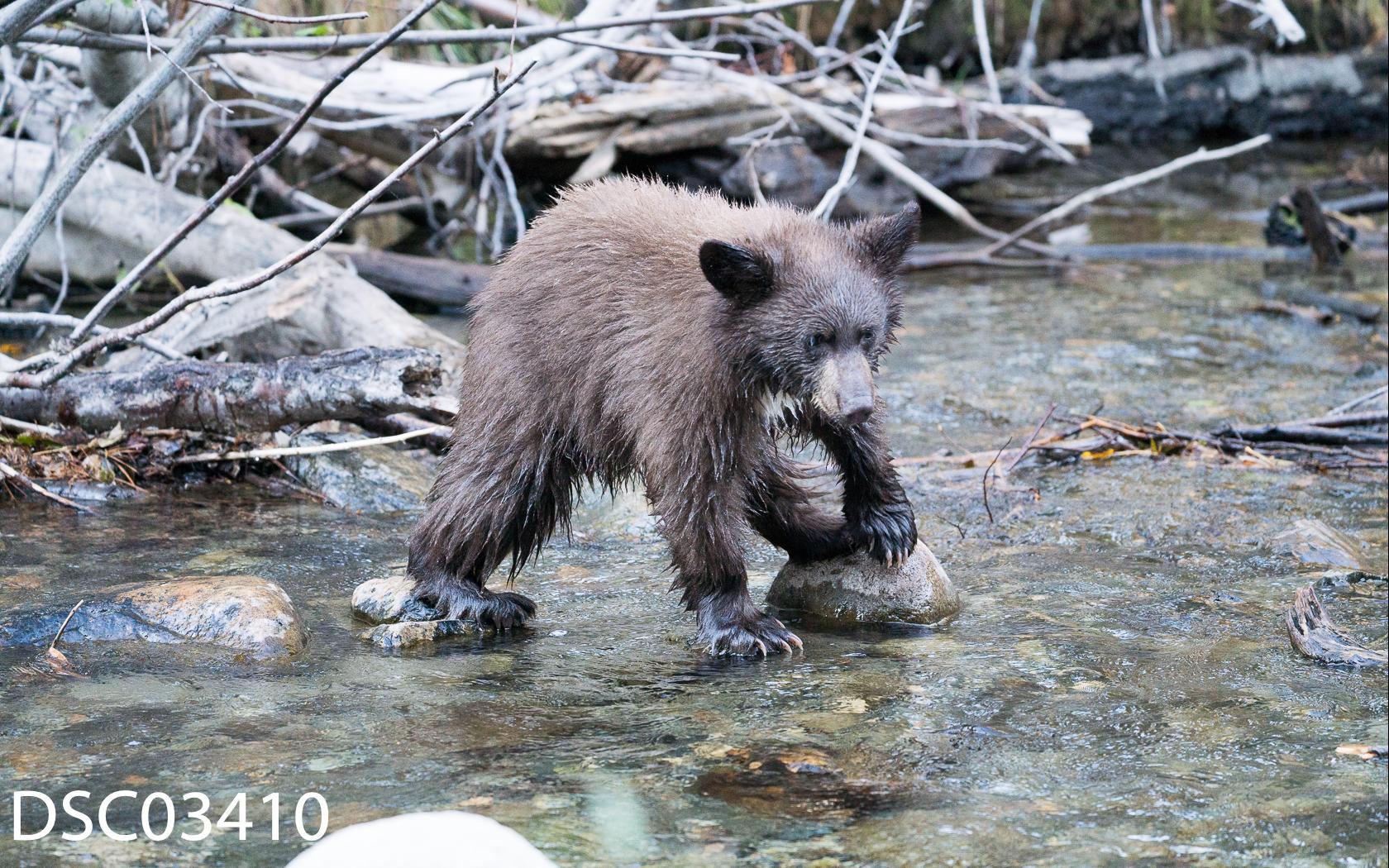 Just Bears-086.jpg