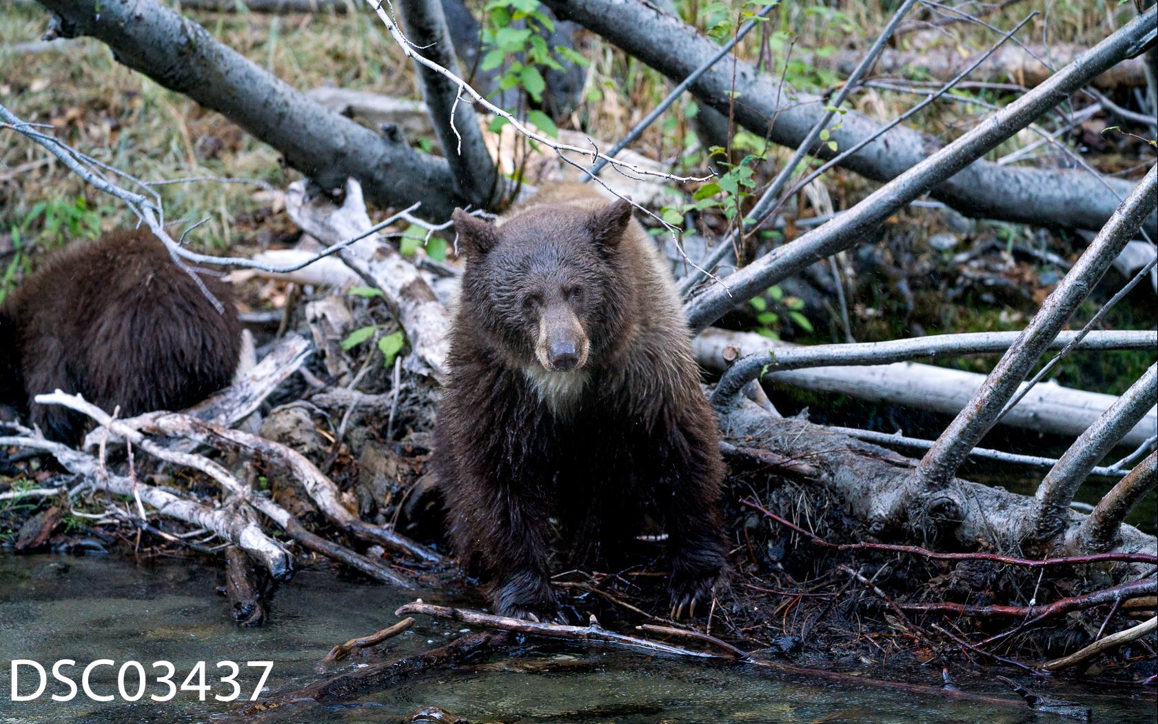 Just Bears-087.jpg