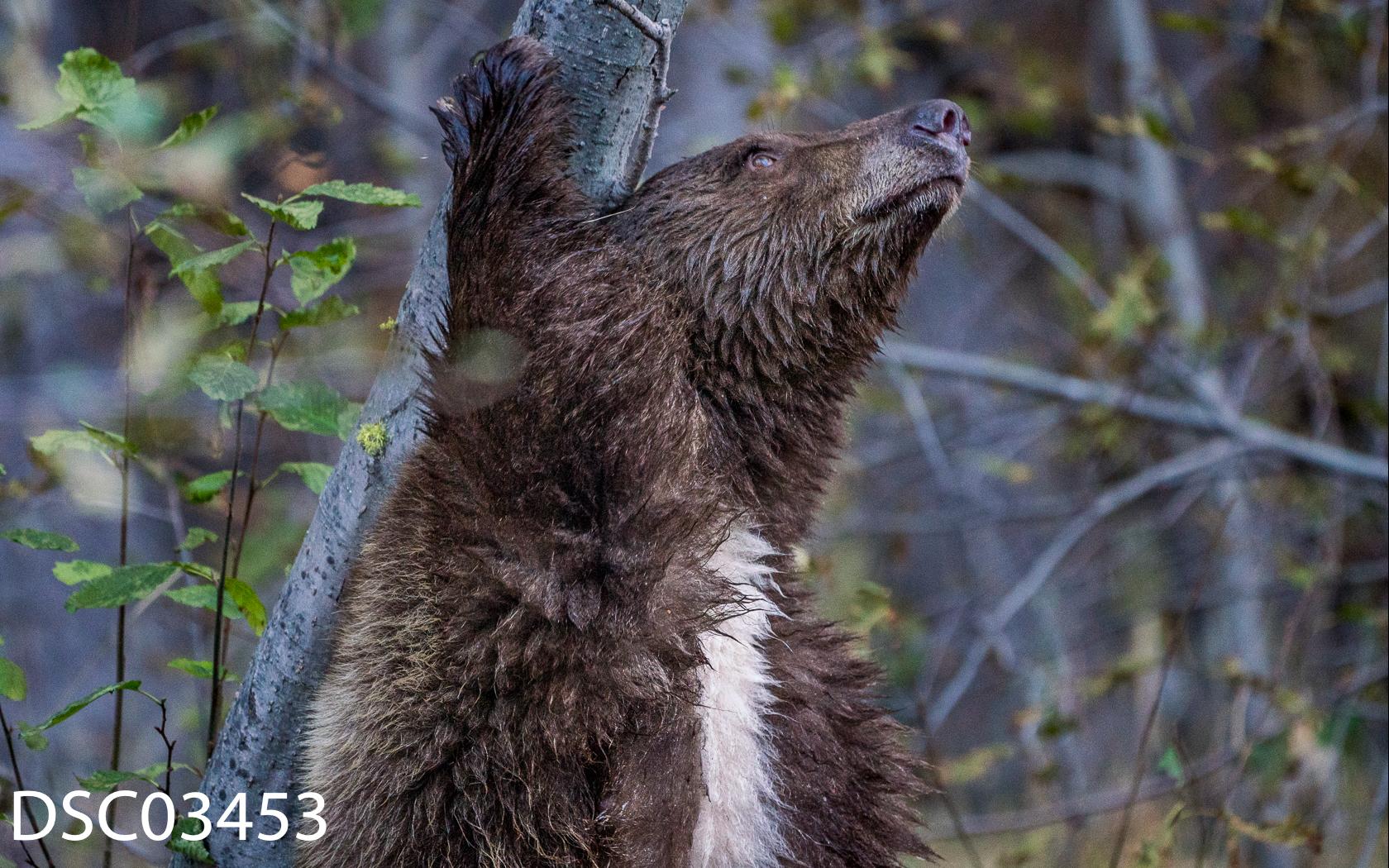 Just Bears-088.jpg