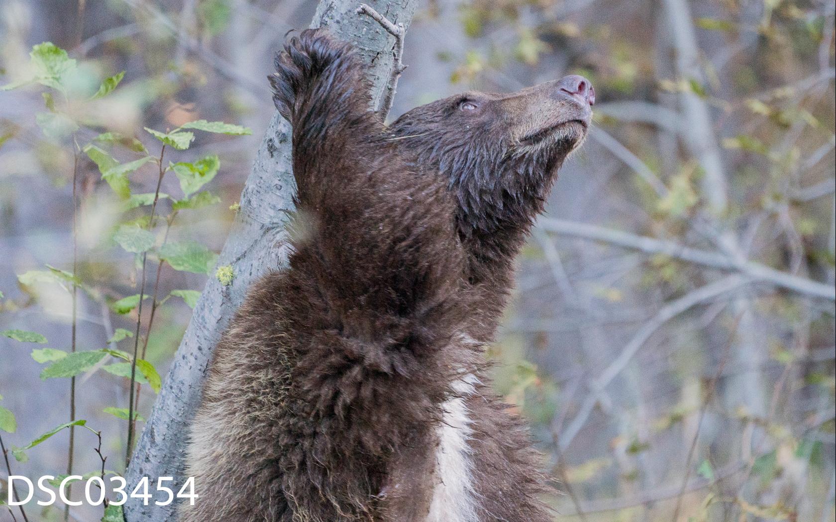 Just Bears-089.jpg