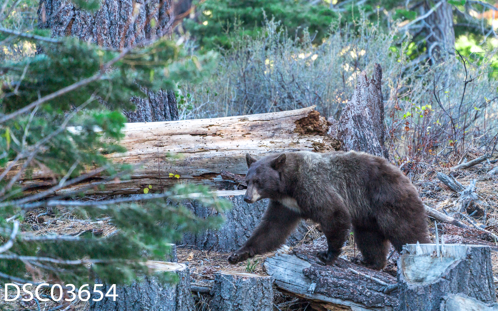 Just Bears-090.jpg