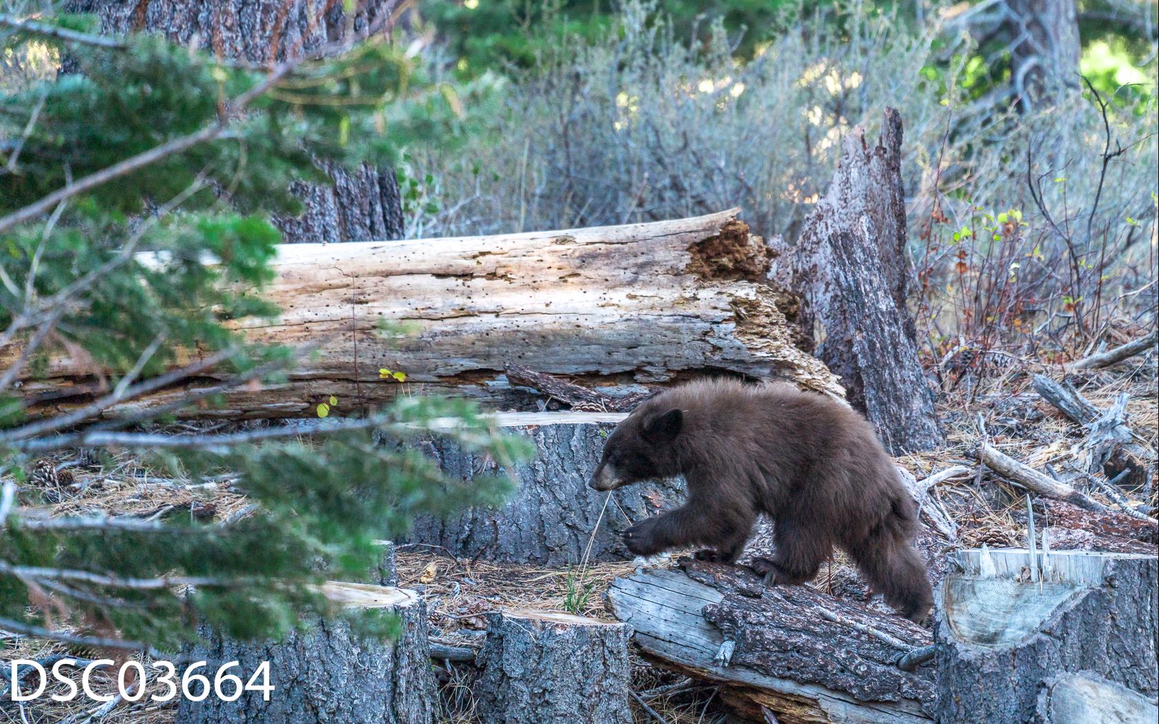 Just Bears-091.jpg