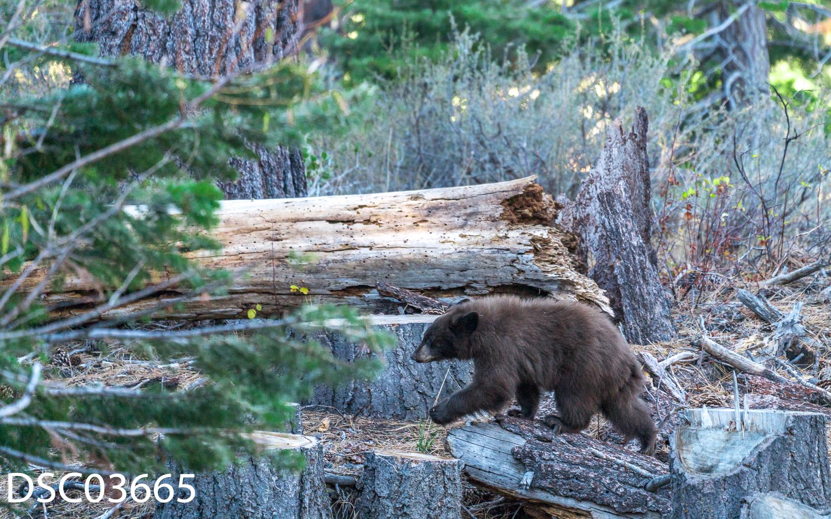 Just Bears-092.jpg