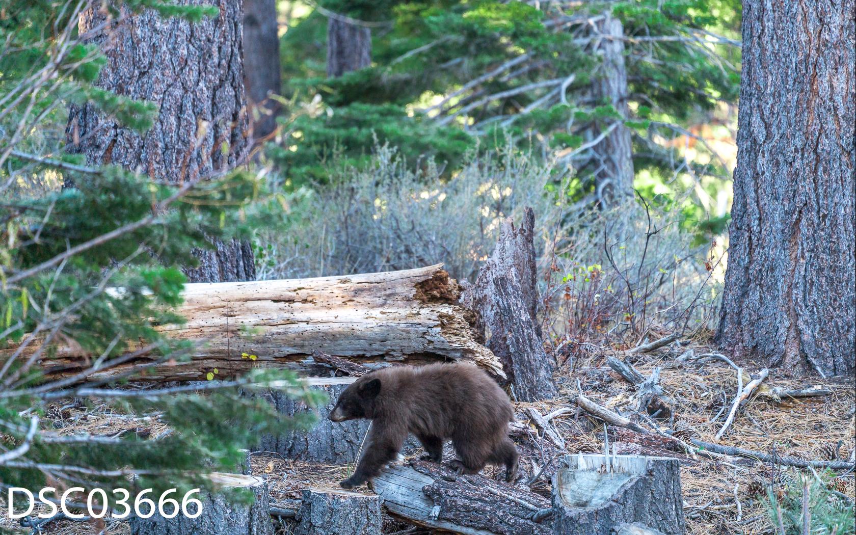 Just Bears-093.jpg
