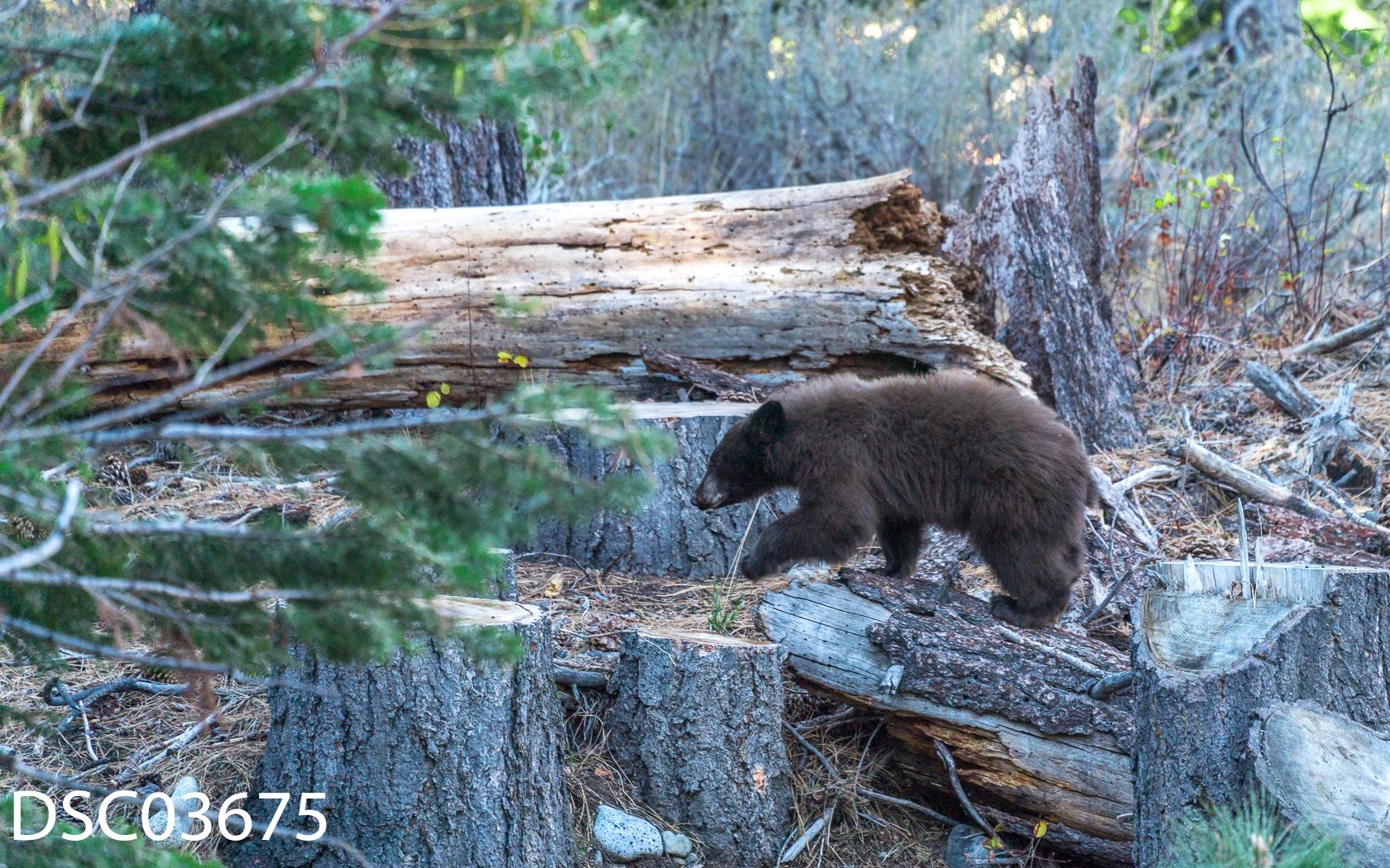 Just Bears-094.jpg