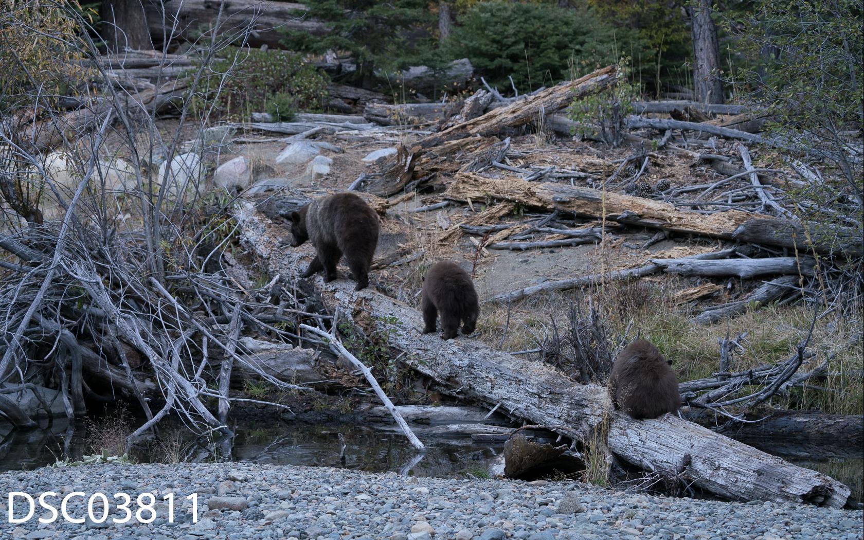 Just Bears-095.jpg