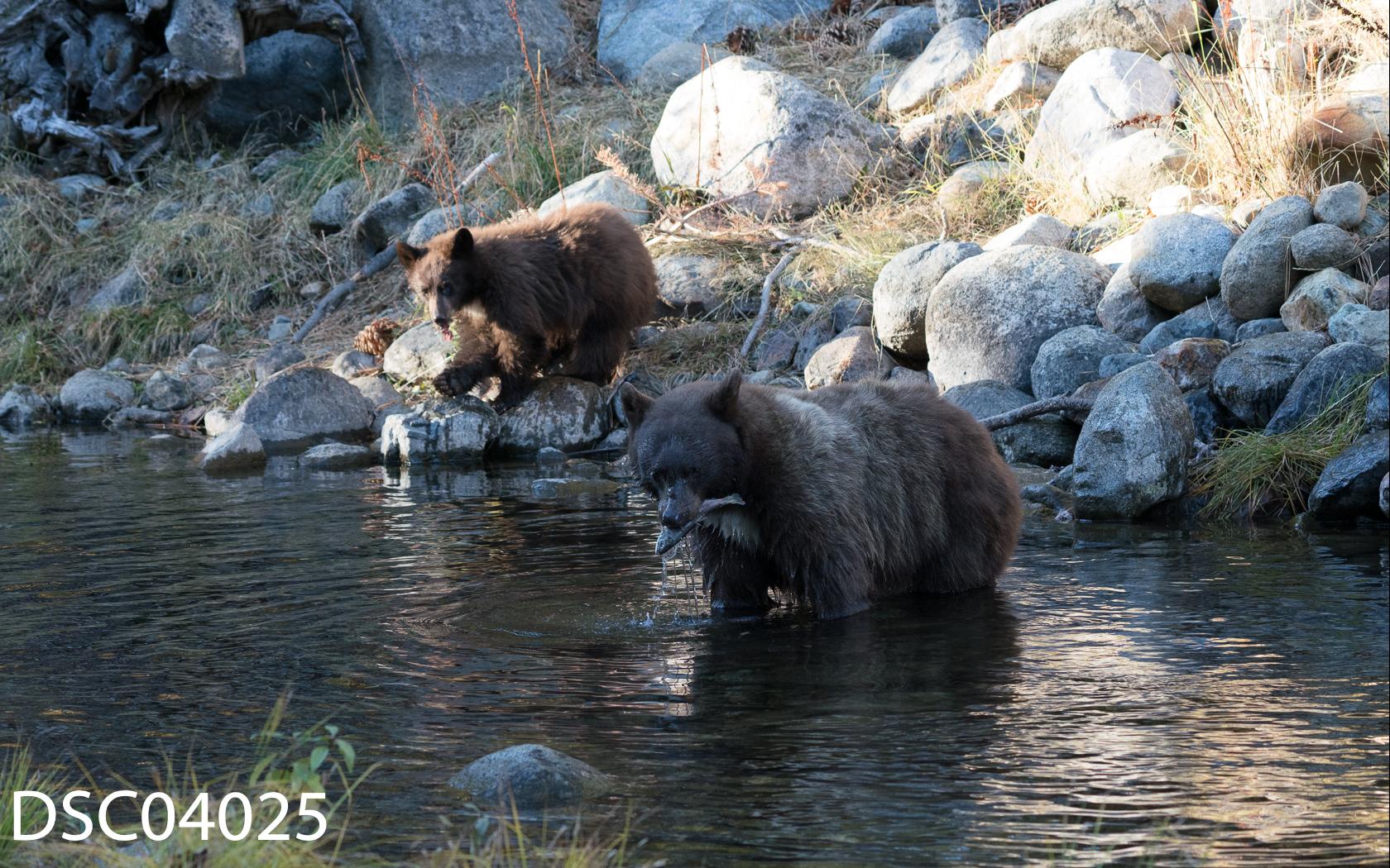Just Bears-096.jpg