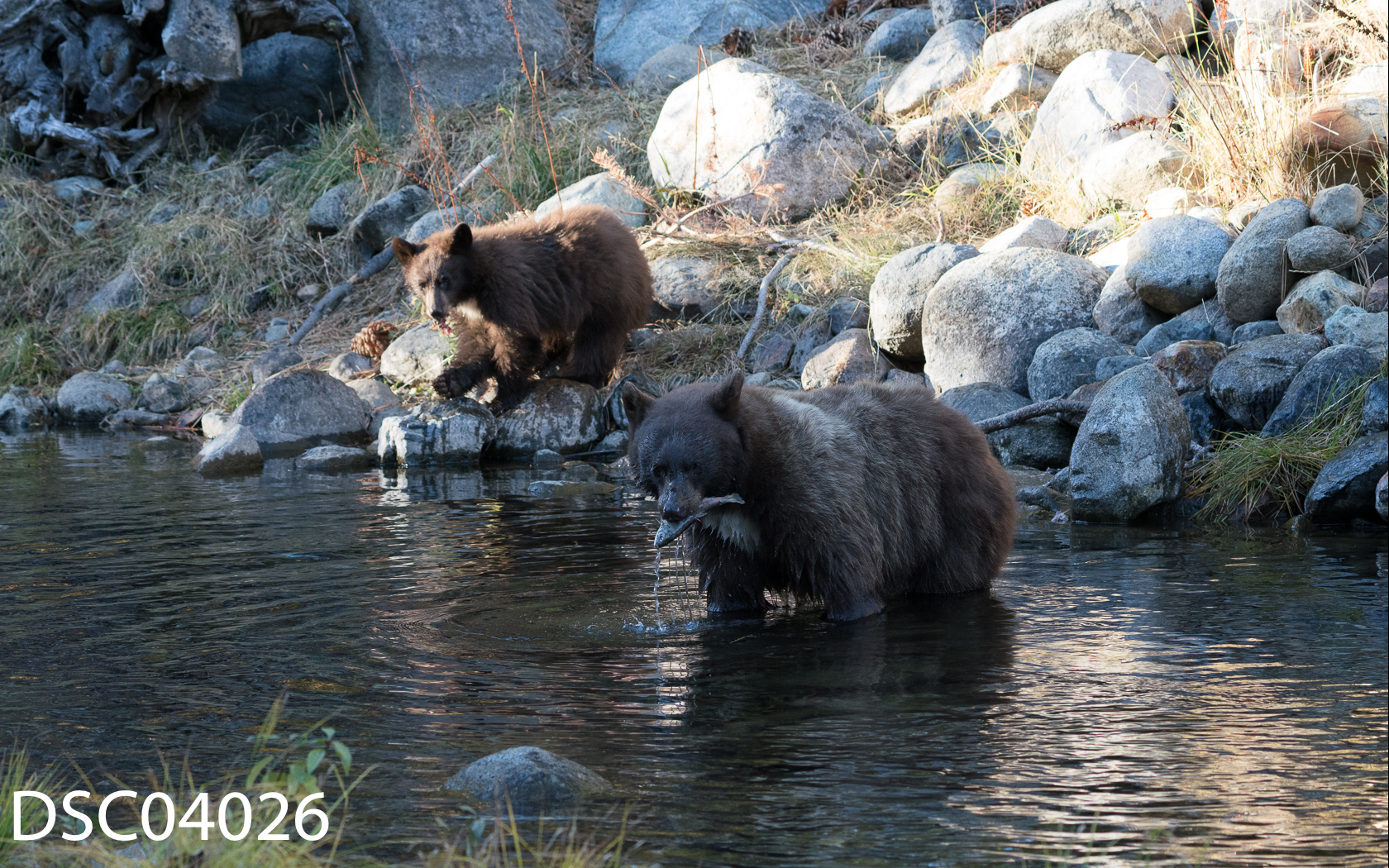 Just Bears-097.jpg