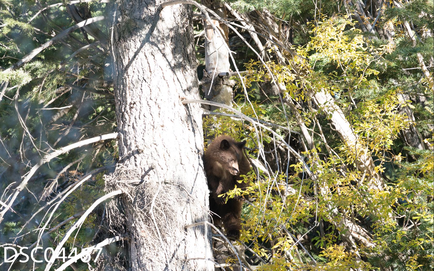 Just Bears-098.jpg
