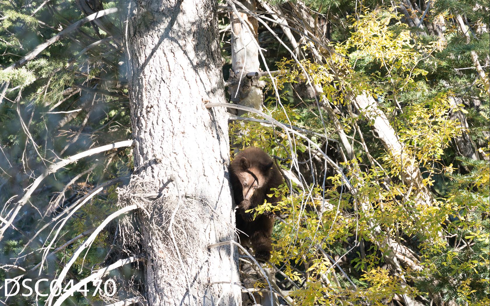Just Bears-099.jpg