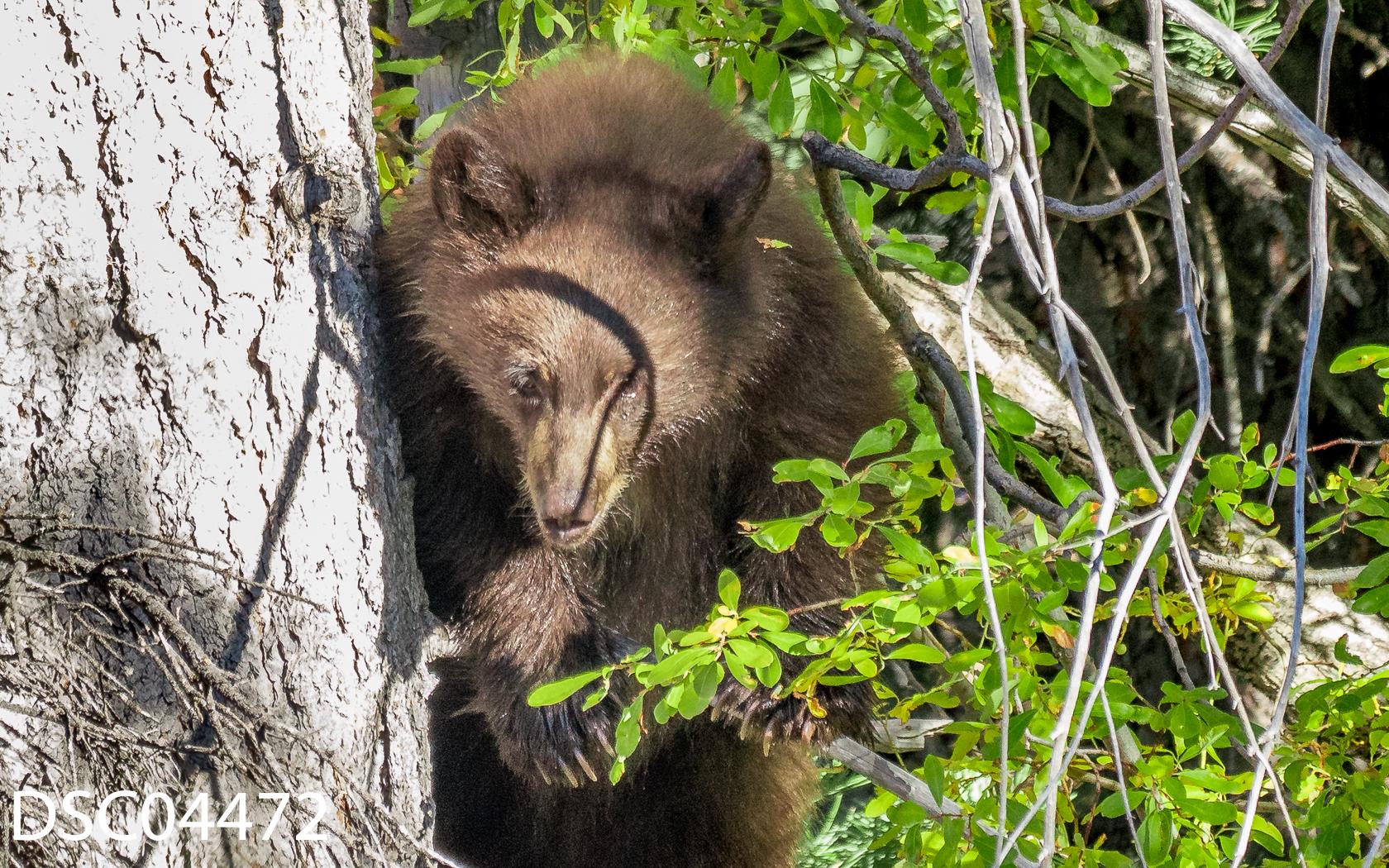 Just Bears-100.jpg
