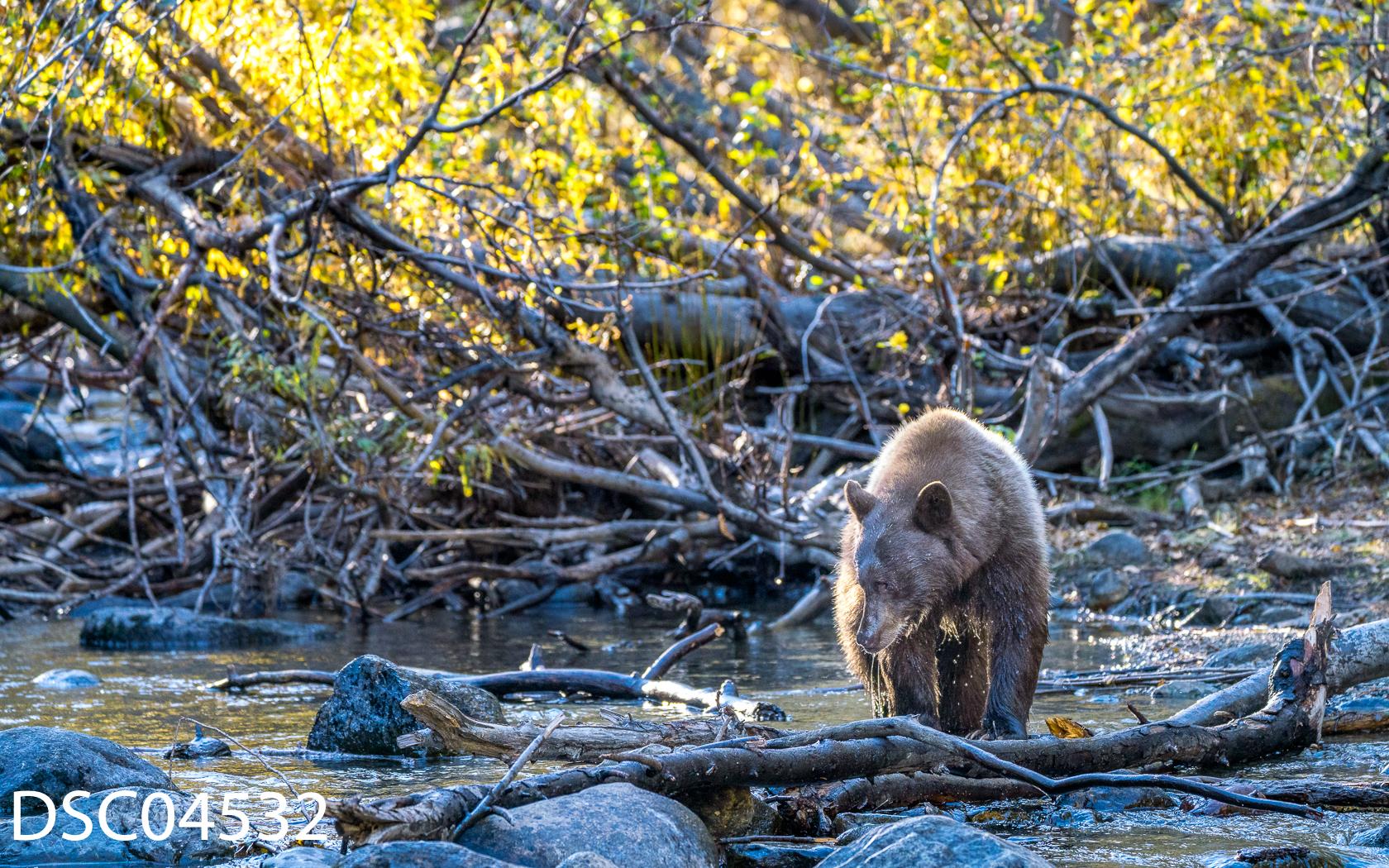 Just Bears-101.jpg