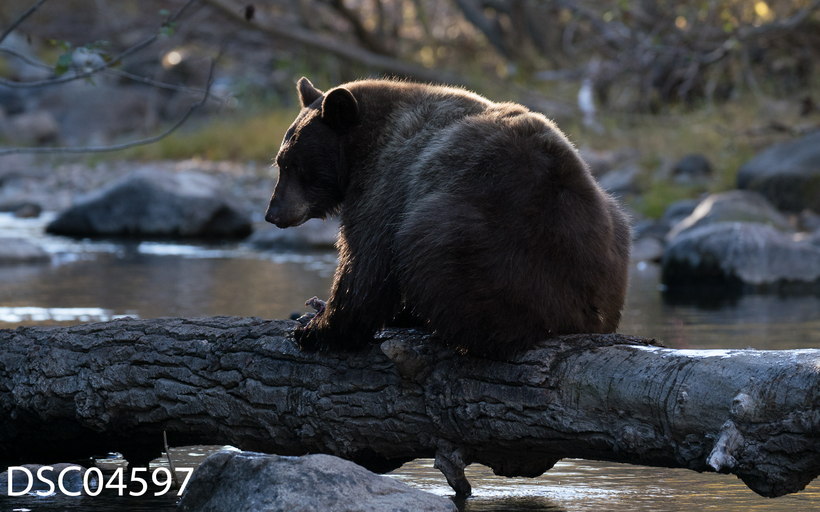 Just Bears-102.jpg