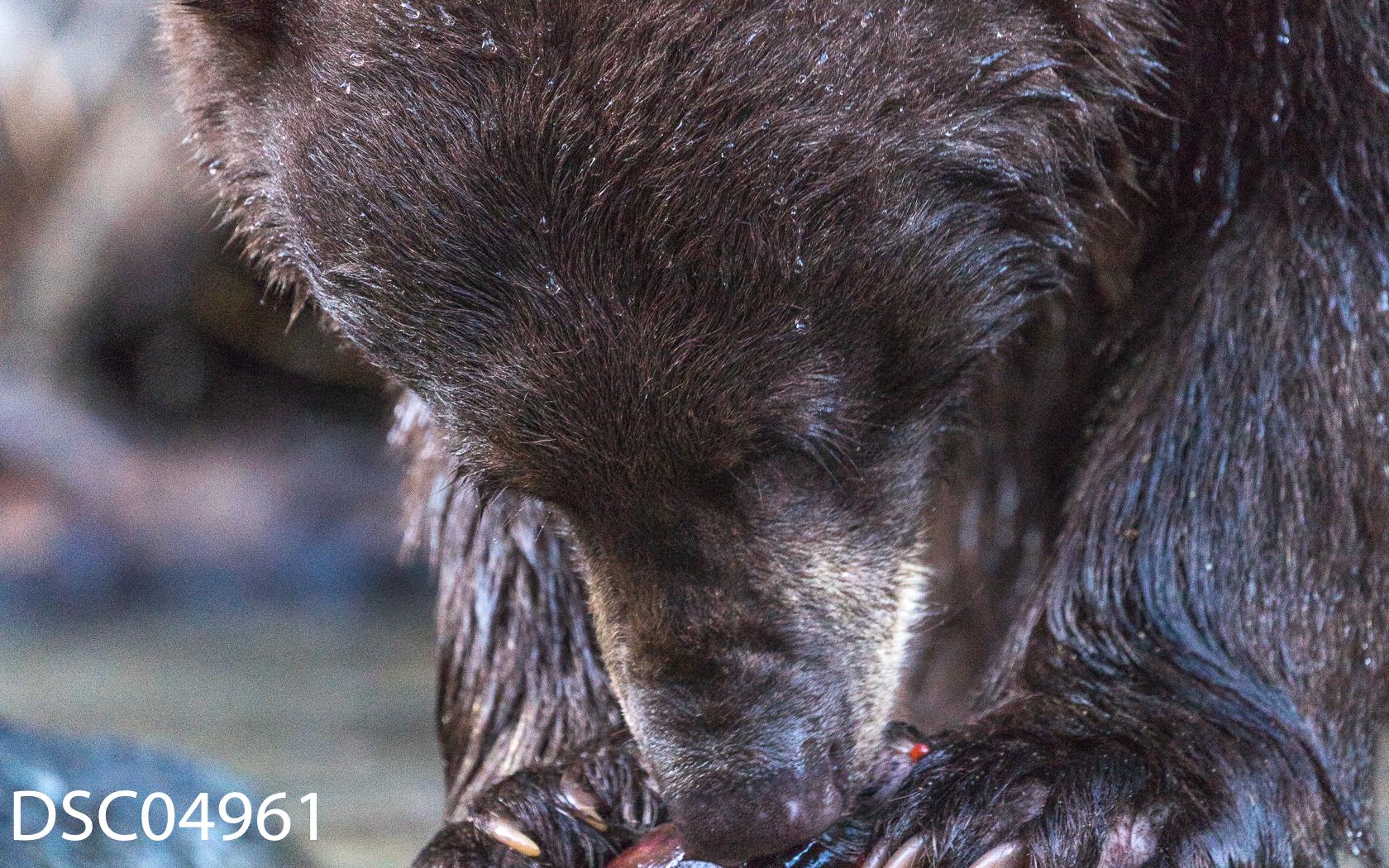 Just Bears-103.jpg