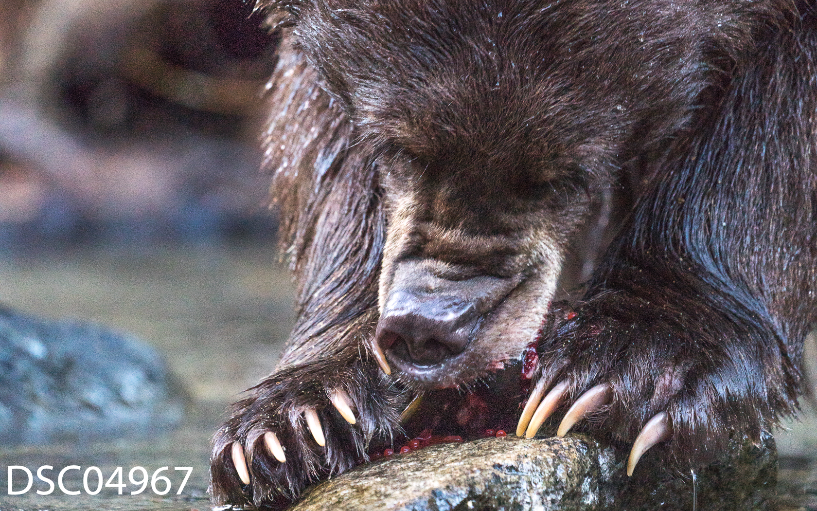 Just Bears-104.jpg