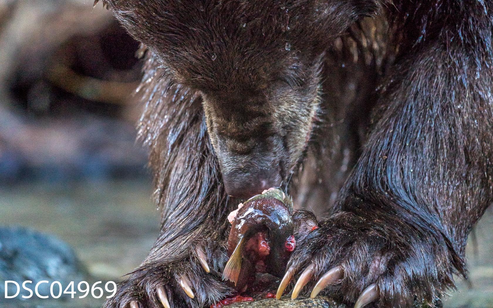 Just Bears-105.jpg