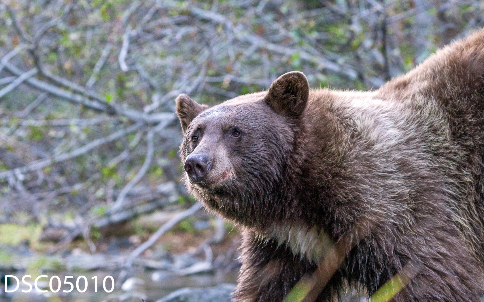 Just Bears-106.jpg