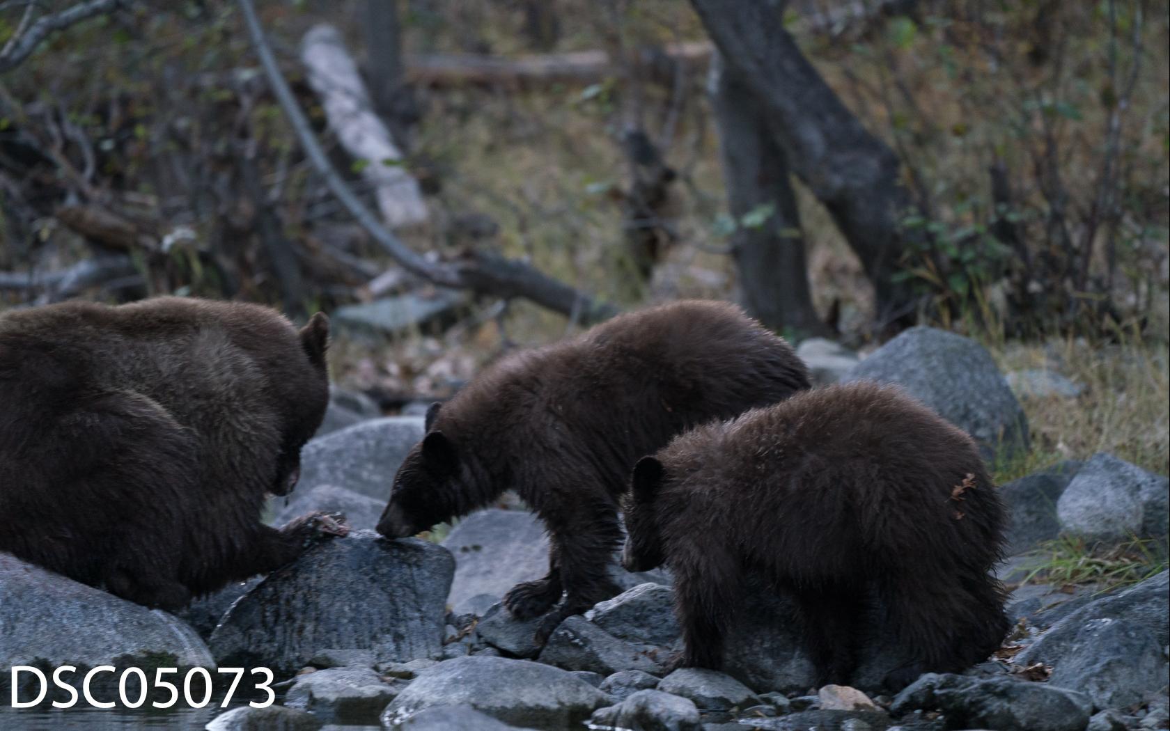 Just Bears-107.jpg