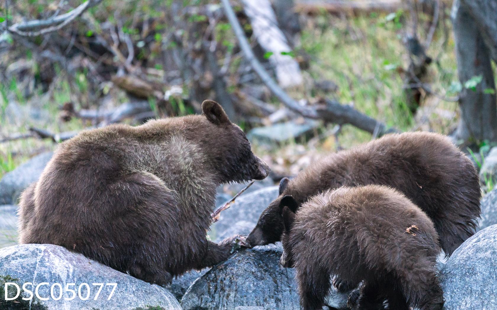 Just Bears-108.jpg